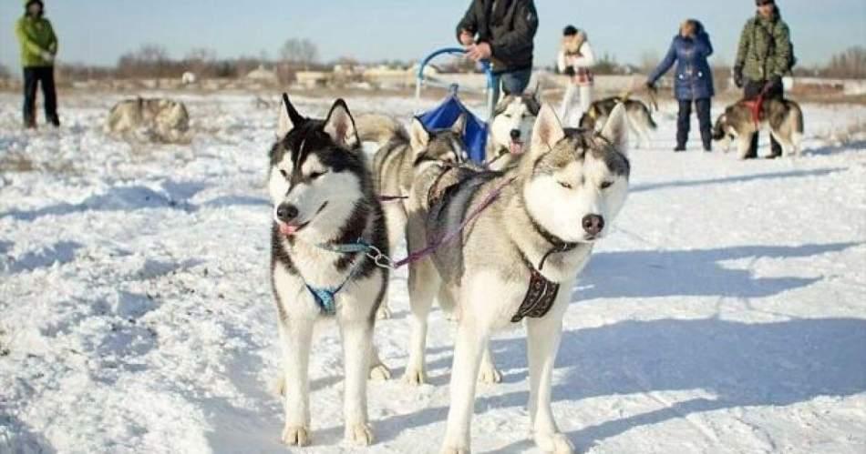 Прогулянка на собачих упряжках 2 км.